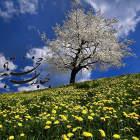 بهاران خجسته باد - گروه کر